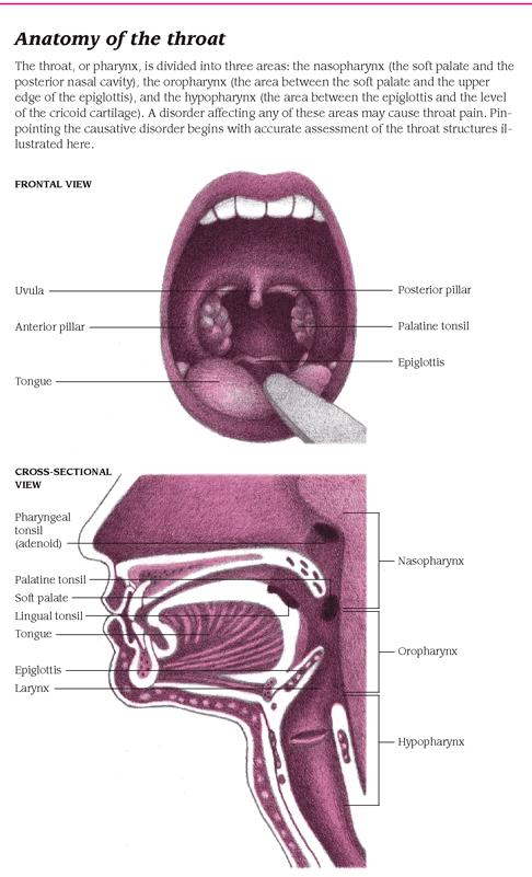 amoxicillin dosage to cure chlamydia