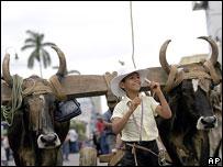 Traditional ox cart parade, San Jose, 2006