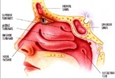 can nasal steroids cause high blood pressure